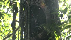 Spider weaving web 3 Stock Footage