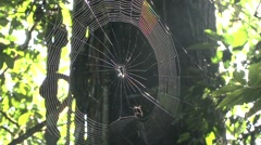 Spider weaving web 4 - stock footage