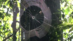 Spider weaving web 5 - stock footage