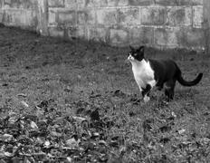 Cat on alert Stock Photos