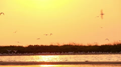 Sea Gulls Flying Over Beach In Sunset Stock Footage