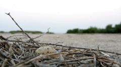 Nest Of a Sea Gull With One Egg Stock Footage