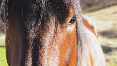 Horse Head Close-up Stock Footage