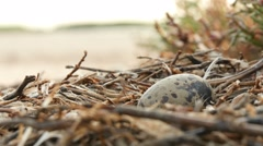 Bird's Nest With One Egg - stock footage