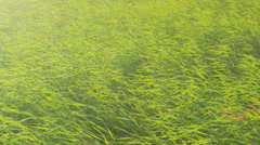 Fresh Grass Swaying On Field - Slow Motion Background Stock Footage