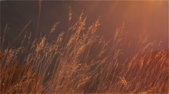 Autumn Grass in the Afternoon Sun Stock Footage