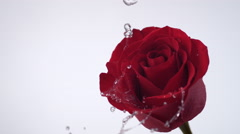 Red rose spinning and creating water splash. Slow Motion. Stock Footage