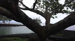 Coconut Island Hilo, Hawaii, seen through  tree branches - stock footage
