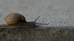 Snail crawl on the cement floor Stock Footage