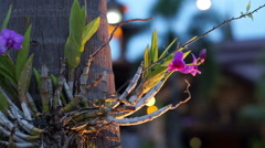 Orchid on the tree light up at night in the garden Stock Footage