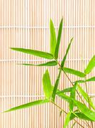 Fresh bamboo leaves border with water drop isolated on white background, bota Stock Photos