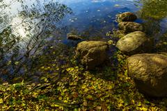 Fallen Leaves near Stones at Edge Of Pond - stock photo