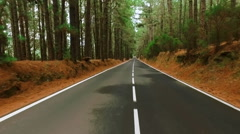 Driving on a road through a pine forest POV shaky Stock Footage