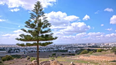 Lonesome pine tree above Tunis cityscape Stock Footage