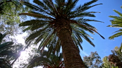 Palm tree silhouette low angle view Stock Footage