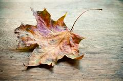autumnal  maple leaf on wooden background - stock photo