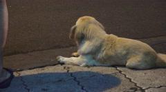 Stray Dog Resting On Sidewalk At Night Chengdi China Stock Footage