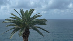 Palm Tree Sea Clouds Small Text Background - 29,97FPS NTSC - stock footage