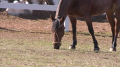 Horse Show 03 Stock Footage