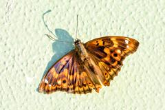 Beautiful Brown moth Stock Photos