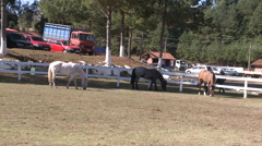 Horse Show 05 Stock Footage