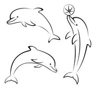 Dolphins and Ball Contours Stock Illustration