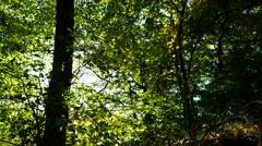 Stock Video Footage of Green Autumn Forest in Aberdeen, Scotland UK