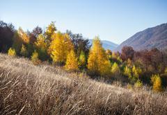 Stock Photo of Autumn in Carpathian Mountains
