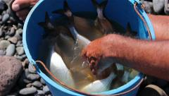 Recently caught fish in a bucket Stock Footage