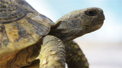 Turtle in Profile from Low Angle - stock footage
