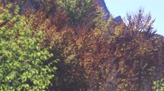 Autumn trees in the red colors are shaken by the wind in slow motion - stock footage