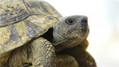 Turtle Aside from Low Angle - stock footage