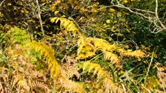 Stock Video Footage of Autumn Leaves in Aberdeen, Scotland UK