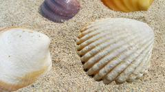 Closeup of sea shells on the sand - stock photo