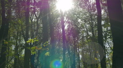 Stock Video Footage of The sun shining through tree trunks. Autumn in the deciduous forest.