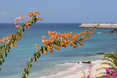 Jandia Beach and Bougainvillea in Fuerteventura, Spain Stock Photos