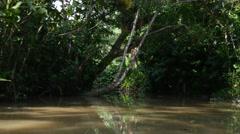 Wetlands in Belem do Para, Brazil - stock footage