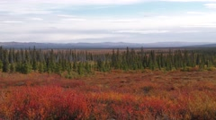 Vast Taiga in Alaska Arctic in Fall Foliage Colors - stock footage