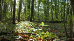 Warm autumn in the deciduous forest. - stock footage