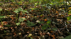 Autumn in the deciduous forest. - stock footage