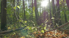 The camera moves on the slider. Autumn in the deciduous forest. - stock footage