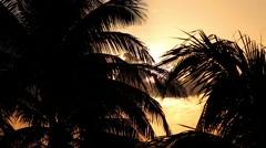 Sunset through palm tree leaf Stock Footage