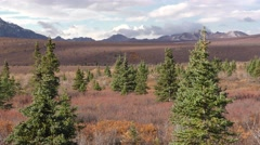 Arctic Taiga Ecosystem in Autumn Stock Footage