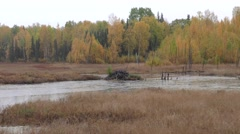 Beaver Lodge in Pond in Autumn in Alaska Stock Footage