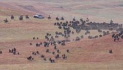 Buffalo aka Bison Herd Stampede and Roundup in Great Plains Stock Footage