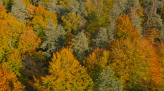 4K Aerial: Detail View of Richly Colored Forest Stock Footage