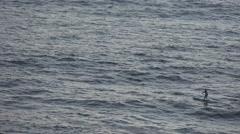 Paddle board at sea Hawaii Stock Footage