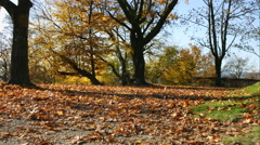 Avenue of trees in autumn Stock Footage