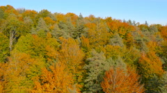 4K Aerial: Reveal Colored Forest in Autumn Stock Footage