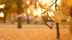 Family with disabled person on walk in evening autumn park 4K Stock Footage